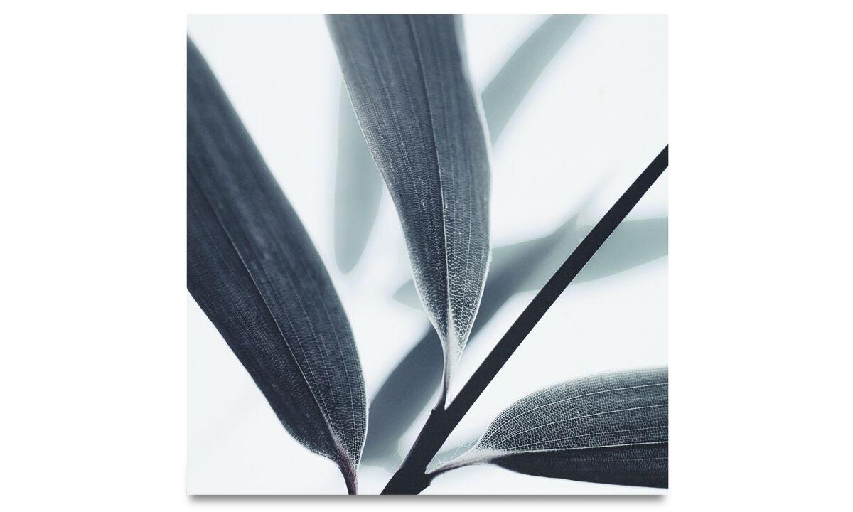 Galeria - Impressão em metal Botanic, Olive leaves - Metal